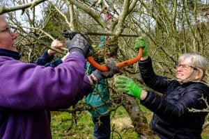 Pruning and Coppicing workshop @ Ancrum